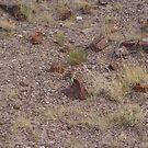 Cool Lizard - Arizona Petrified National Forrest by leih2008