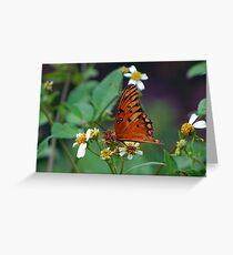 Orange butterfly on Spanish Needles Greeting Card