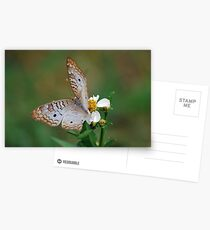 White butterfly on Spanish Needles 2 Postcards