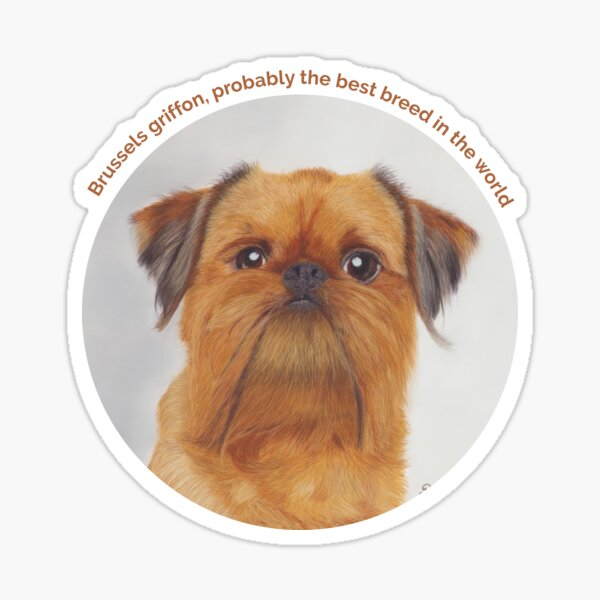 Brussels griffon portrait Sticker