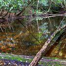 «Downstream - Rainforest - NSW - Australia» de Bryan Freeman