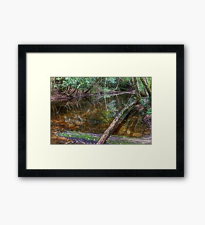 Downstream - Rainforest - NSW - Australia Framed Print