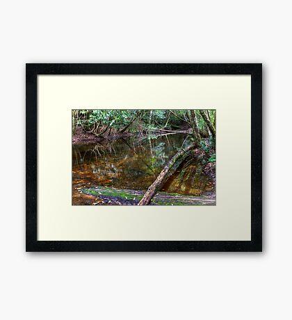 Downstream - Rainforest - NSW - Australia Framed Print
