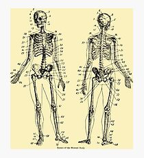 Lámina fotográfica Anatomía: El Sistema Esquelético Ver.