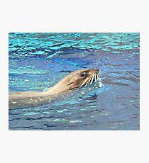 Australian Fur Seal Relaxing Photographic Print
