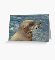 Australian Fur Seal Greeting Card