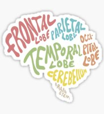 Parts of the human brain Sticker