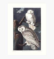 Snowy Owl - John James Audubon Art Print