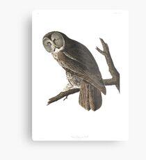 Great Gray Owl -  Metal Print