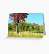 Red Autumn Tree Greeting Card