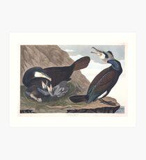 Great Cormorant - John James Audubon Art Print
