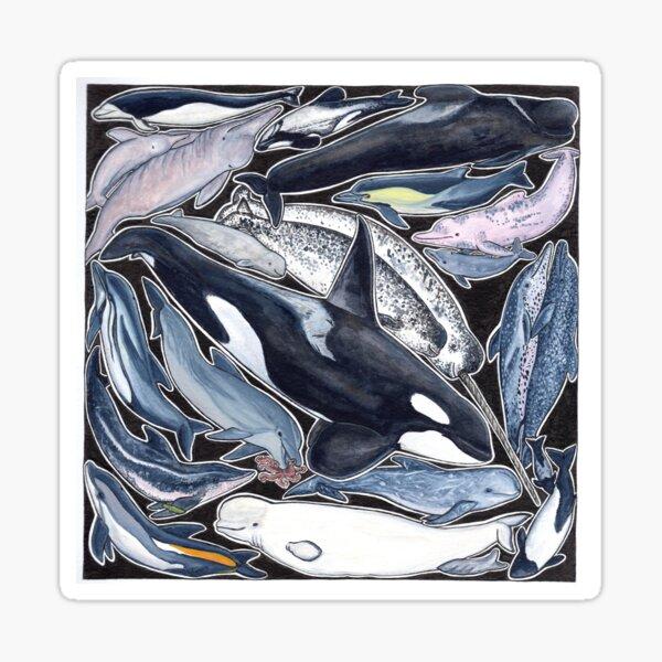 Delfine, Orcas, Belugas, Narwale und Cie Sticker