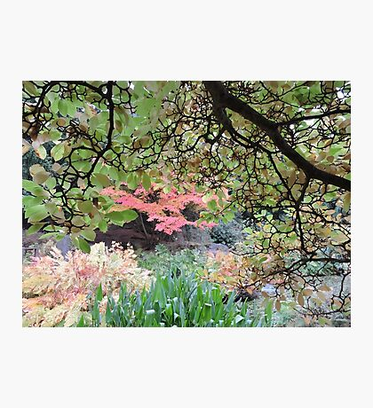 Autumn: Branches Lowered Photographic Print