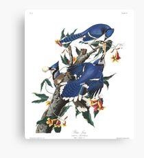 Blue Jay - John James Audubon Canvas Print