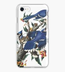 Blue Jay - John James Audubon iPhone Case/Skin