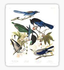 Magpies, Jays & nutcrackers - John James Audubon Sticker