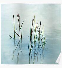 Water grass Poster