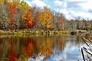 Autumn on the Pond by Kathleen Daley