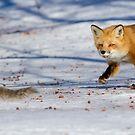 The squirrels hunter by MIRCEA COSTINA
