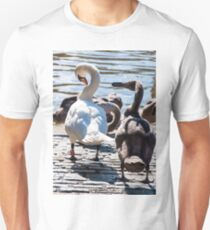 Beautiful swan familiy with nestlings in lake Unisex T-Shirt