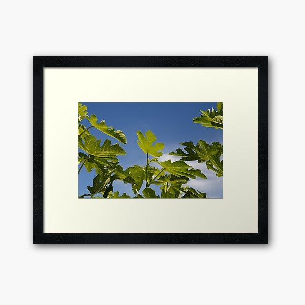 Fig Leaves Gerahmter Kunstdruck