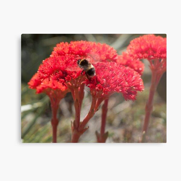 Bee Amongst the Flowers Metal Print