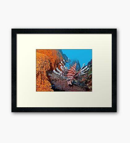 Red Lionfisch - Pazifischer Rotfeuerfisch Framed Print