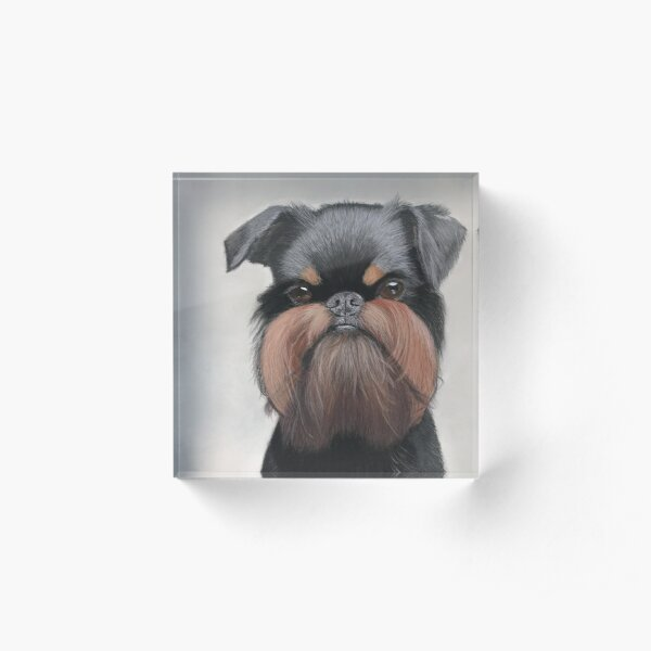 Belgian griffon portrait Acrylic Block
