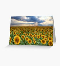 Texas Wildflower Images - Sunflower Fields of Summer 7 Greeting Card