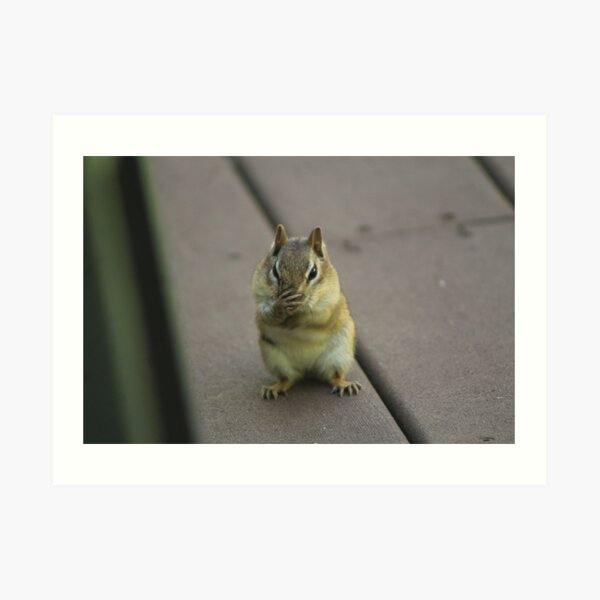 Eastern Chipmunk With Little Paws Art Print