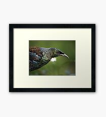 Tui - so, BIGGER is best a study shows.......! Framed Print