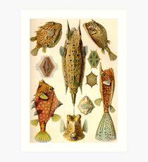 Box Fish- Ernst Haeckel Art Print