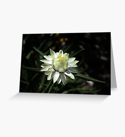 Blooming Flower Greeting Card