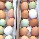 Green Eggs - No Ham 2 by Christine  Wilson
