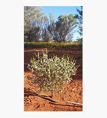 Outback Bush Photographic Print