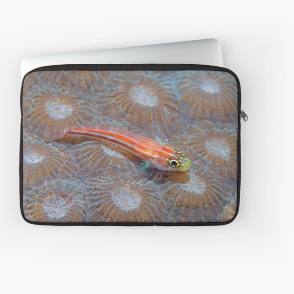 Goby Laptop Sleeve