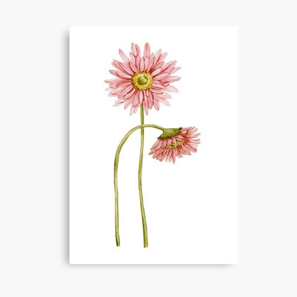 Pink gerberas (daisy) light Canvas Print