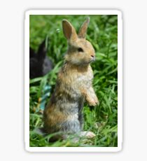 Cornellius the most entertaining bunny ever Sticker