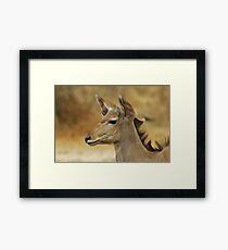 Kudu Bull Calf - Innocent Beauty Framed Print