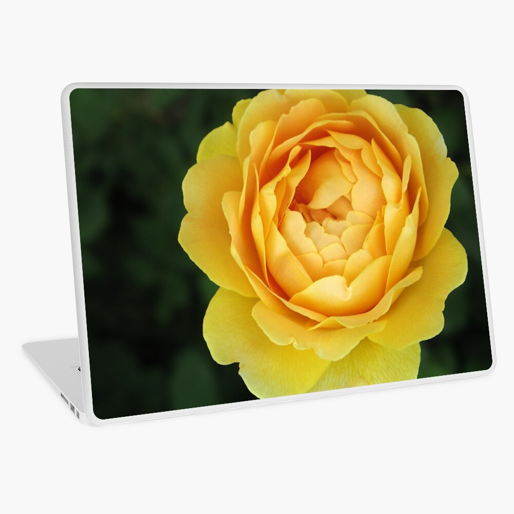 Apricot Rose Laptop Skin