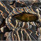 Rockform 76 The Zebra Stone by Wayne King