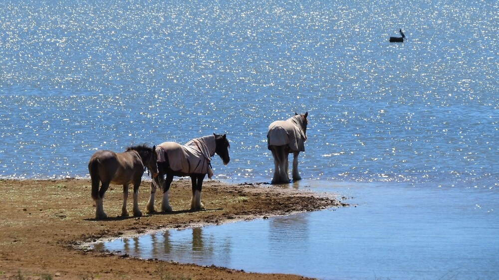 """""""You Can Lead A Horse To Water....."""" By Sharon Brown"""