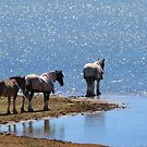 You Can Lead A Horse To Water..... by Sharon Brown