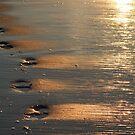 Walking On Sunshine  by AnneDB