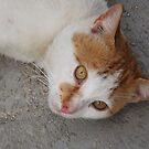Kedi by rasim1