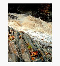 Livermore Leaves at High Water Photographic Print
