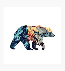 Bear Photographic Print