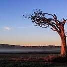 A Tree, Boughing to Nature by Wrayzo