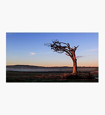 A Tree, Boughing to Nature Photographic Print