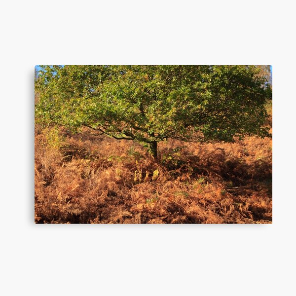 Early Autumn Colours Canvas Print